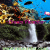 dream vacation lombok, bali, raja ampat