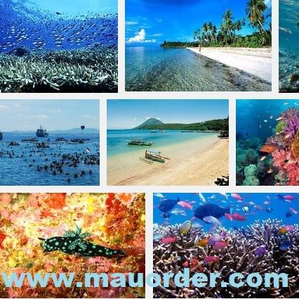 Menikmati pemandangan bawah laut di Wisata Taman Bunaken
