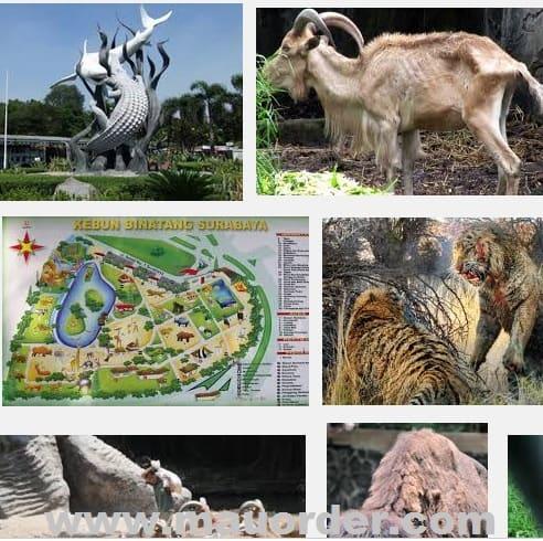 Wisata Kebun Binatang  surabaya terbesar di Asia tenggara