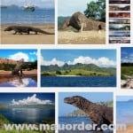 gambar pulau komodo