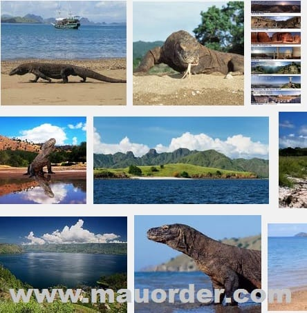 Mengunjungi salah satu 7 keajaiban dunia Pulau Komodo
